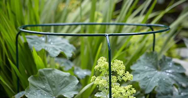 Handcrafted Plant Supports Tom Chambers